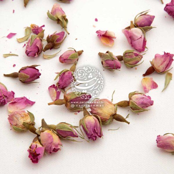 غنچه گل گلاب